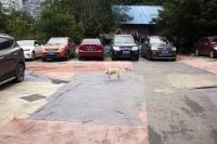 http://drapeaumartin.com/files/gimgs/th-52_chien-aplats.jpg